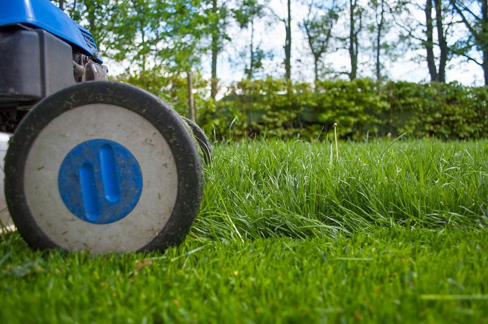 Entretien de la pelouse – conseils pour un gazon vert et luxuriant